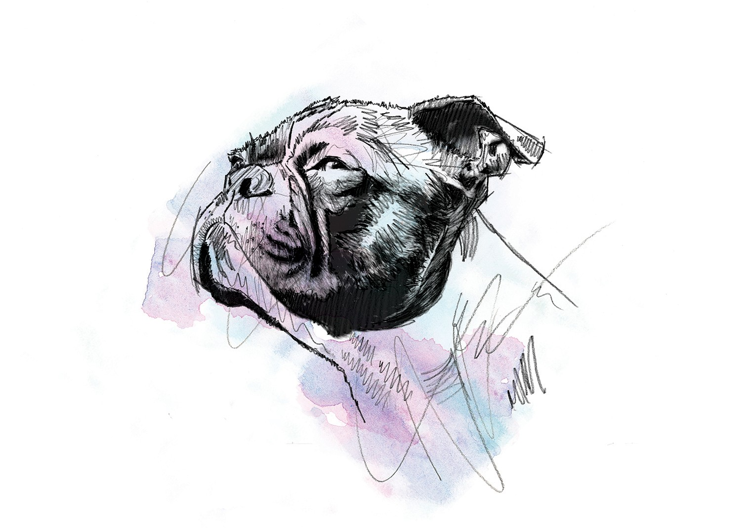 001 Dm Nobull Justdog Art