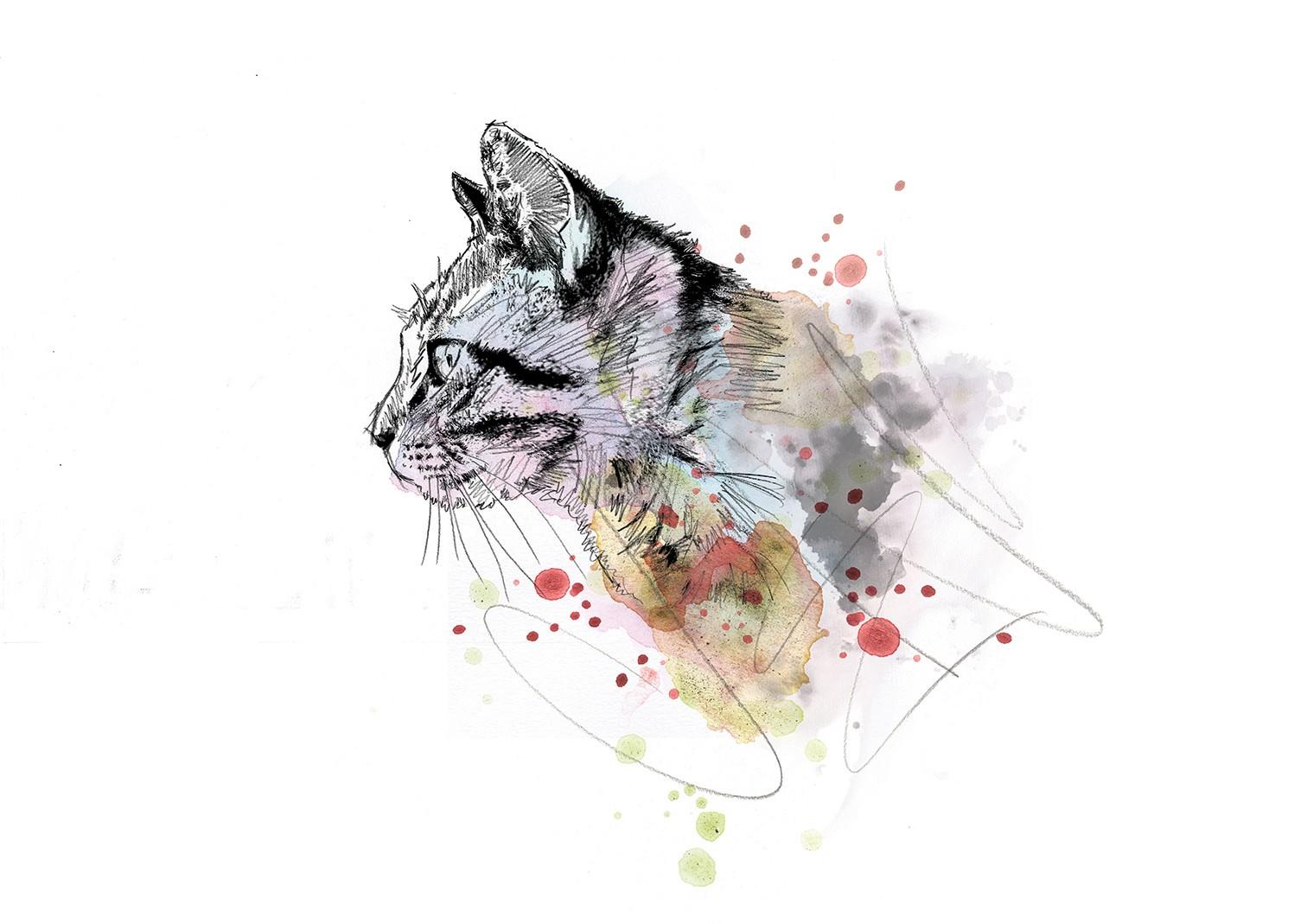 038 Dm Cats Curiosity The Cat Art