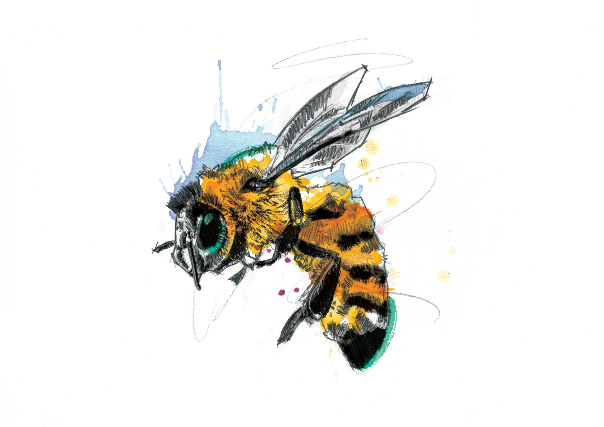 00113 Dm Don 039 T Worry Bee Happy Art
