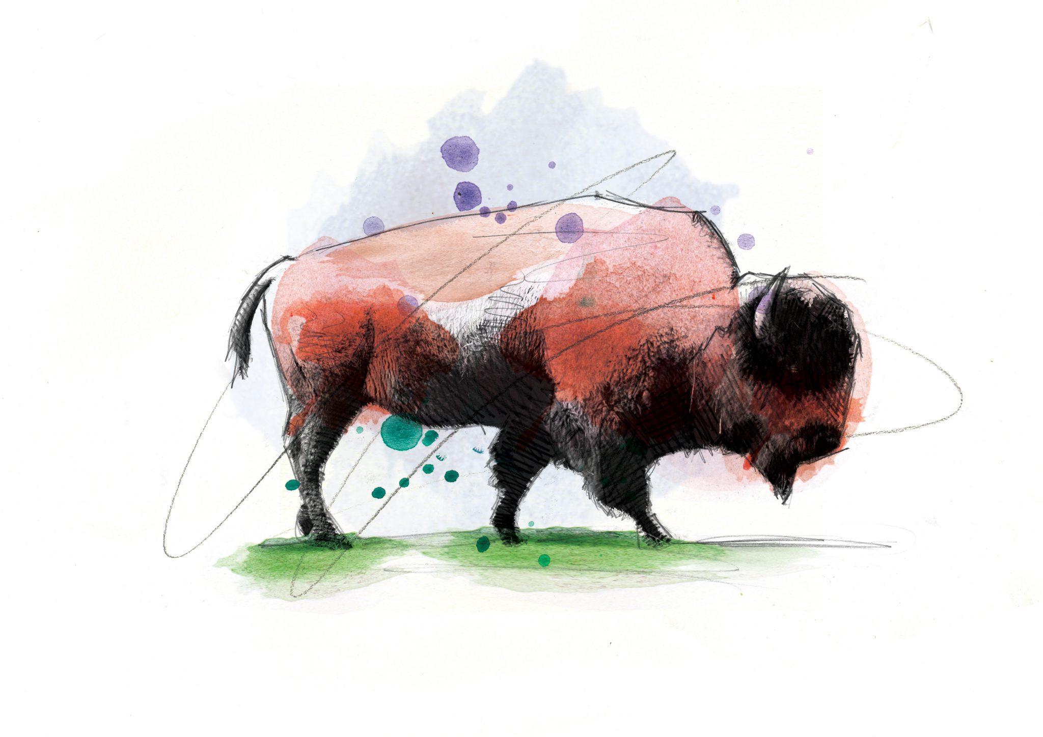 00117 Dm Big Bad Bison Art