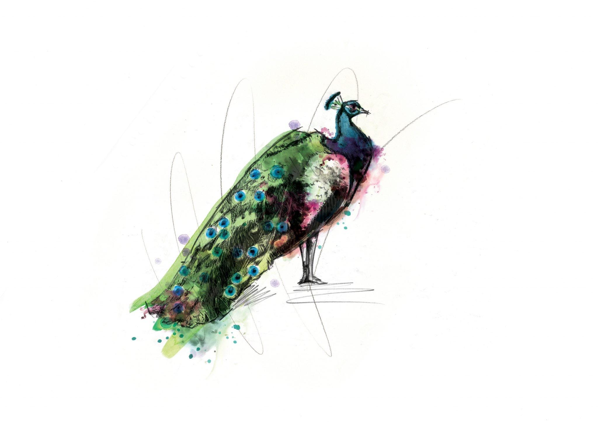 00119 Dm Proud As A Peacock Art