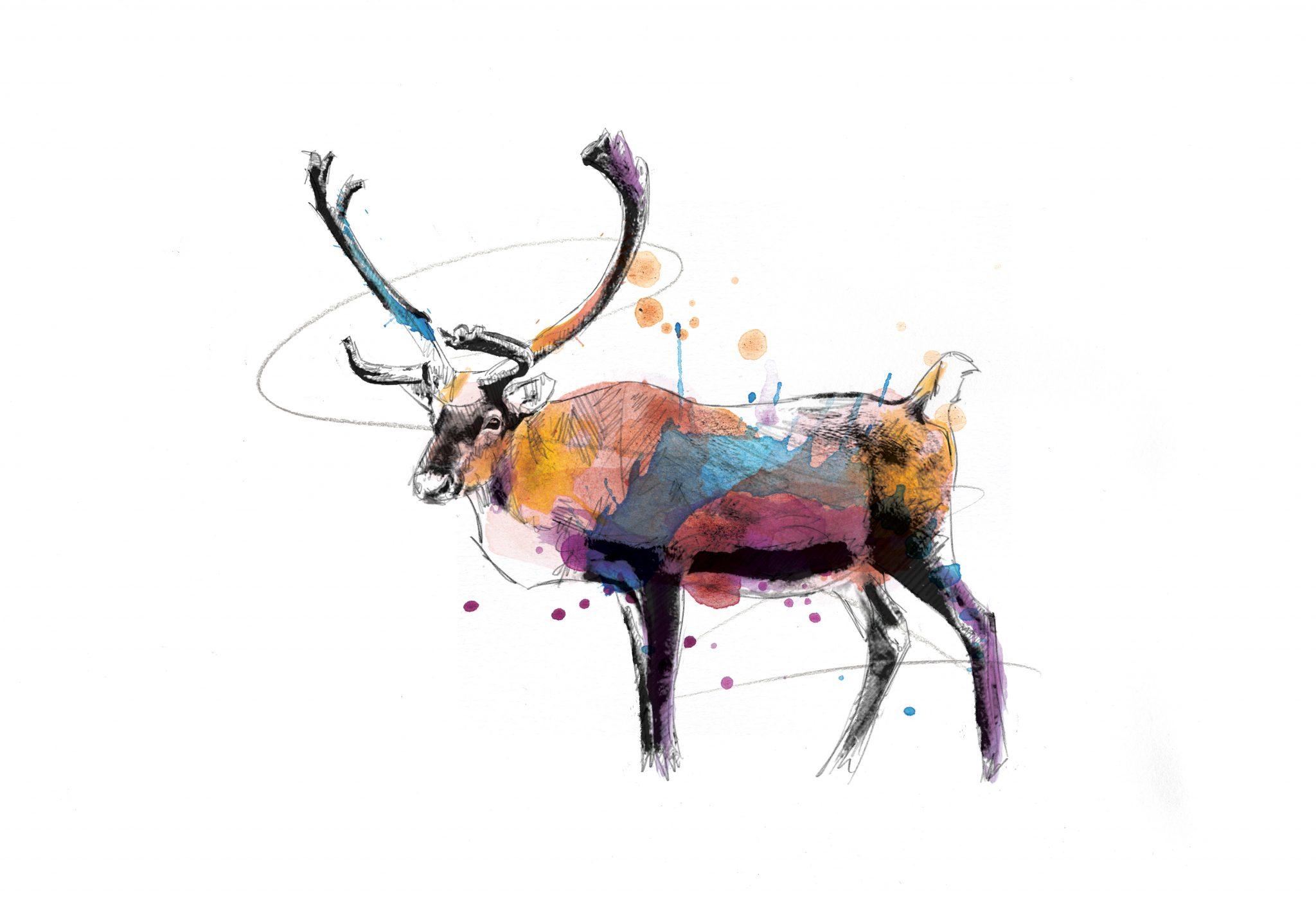 00136 Dm Deer Me Art