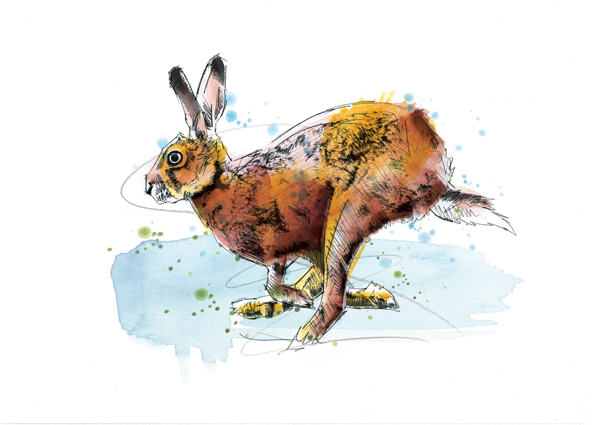 0132 Dm Hare Today Gone Tomorrow Art