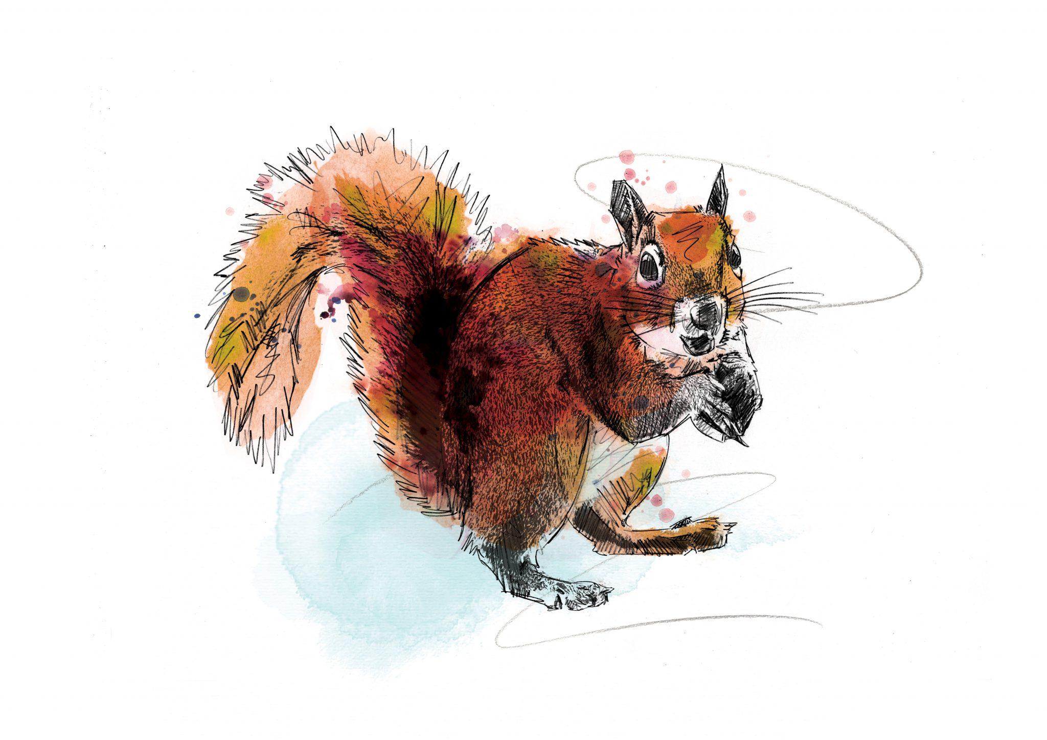 0133 Dm Squirrel Away Art