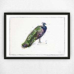 Proud as a Peacock - Original Watercolour