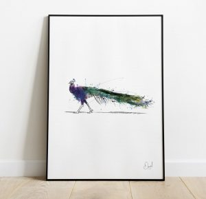 A massive Peacock - Peacock art print
