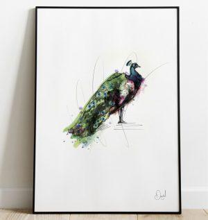 Peacock - Proud as a peacock art print