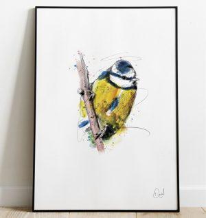 Out of the blue - Blue Tit bird art print