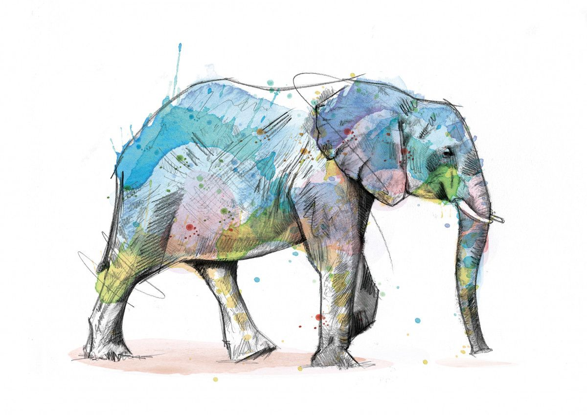 00243 Dm Elephant Herdless Immunity Art