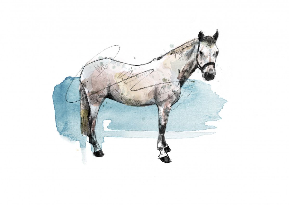00258 Dm The Grey Horse Art
